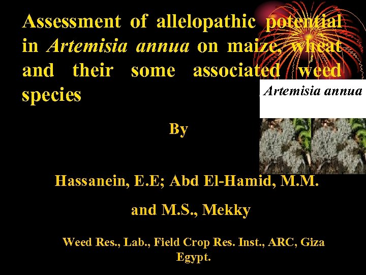 Assessment of allelopathic potential in Artemisia annua on maize, wheat and their some associated