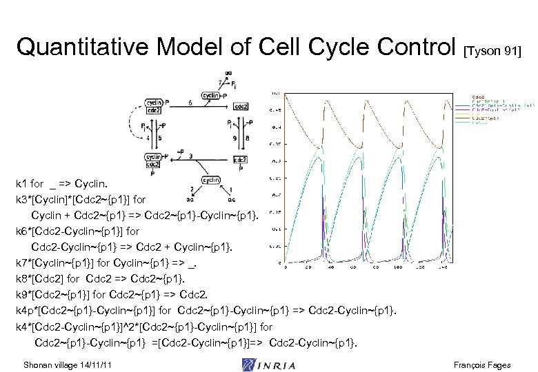 Quantitative Model of Cell Cycle Control [Tyson 91] k 1 for _ => Cyclin.