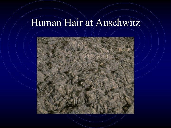 Human Hair at Auschwitz
