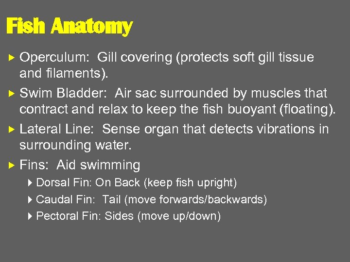 Fish Anatomy Operculum: Gill covering (protects soft gill tissue and filaments). Swim Bladder: Air