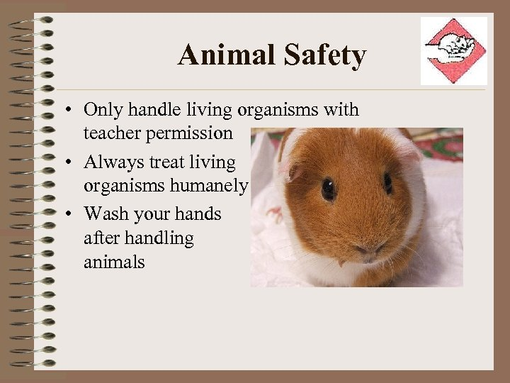Animal Safety • Only handle living organisms with teacher permission • Always treat living