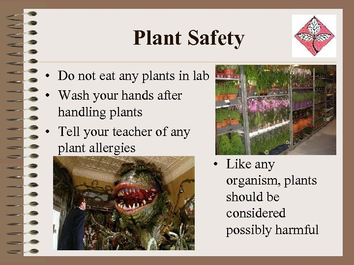 Plant Safety • Do not eat any plants in lab • Wash your hands