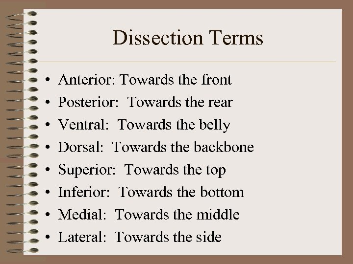 Dissection Terms • • Anterior: Towards the front Posterior: Towards the rear Ventral: Towards