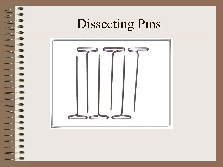 Dissecting Pins