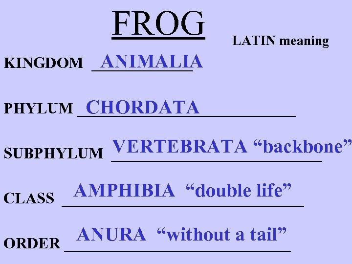"""FROG LATIN meaning ANIMALIA KINGDOM _______ PHYLUM ______________ CHORDATA VERTEBRATA """"backbone"""" SUBPHYLUM ______________ AMPHIBIA"""