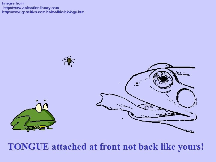 Imagse from: http: //www. animationlibrary. com http: //www. geocities. com/animalbio/biology. htm TONGUE attached at