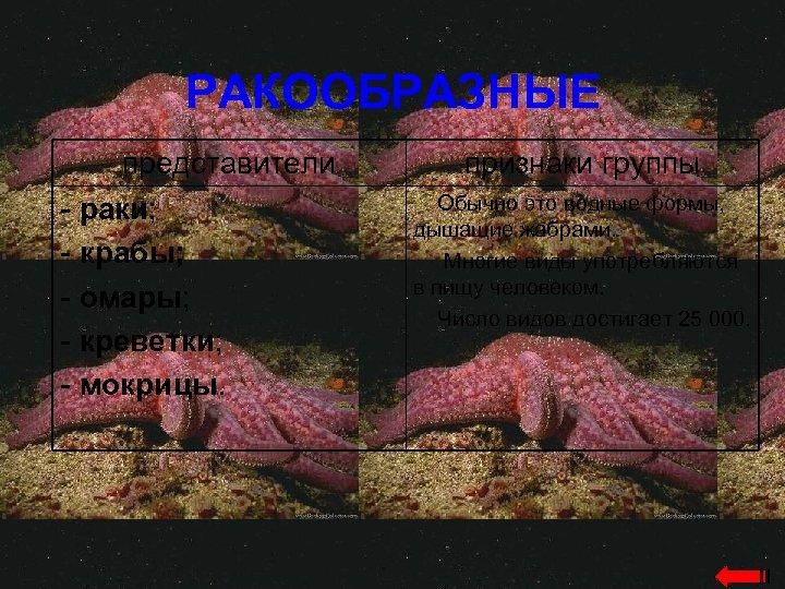 РАКООБРАЗНЫЕ представители - раки; - крабы; - омары; - креветки; - мокрицы. признаки группы