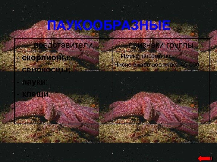 ПАУКООБРАЗНЫЕ представители - скорпионы; - сенокосцы; - пауки; - клещи. признаки группы Имеют восемь