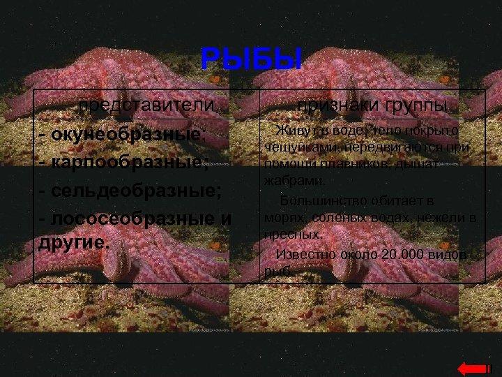 РЫБЫ представители - окунеобразные; - карпообразные; - сельдеобразные; - лососеобразные и другие. признаки группы