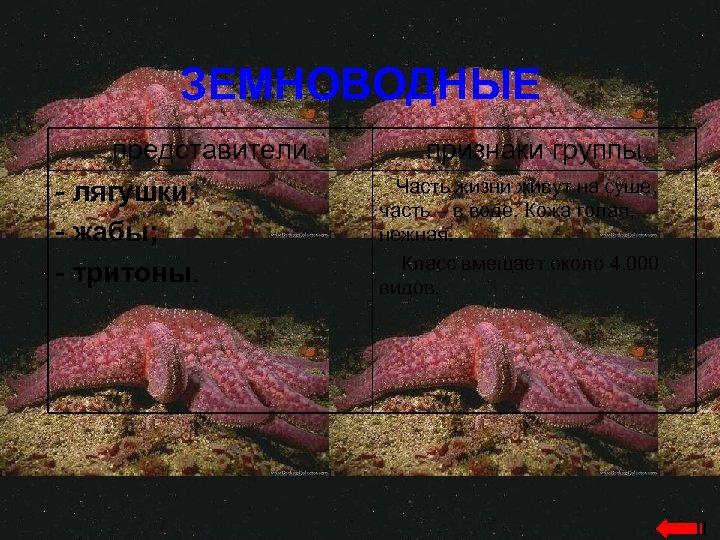 ЗЕМНОВОДНЫЕ представители - лягушки; - жабы; - тритоны. признаки группы Часть жизни живут на