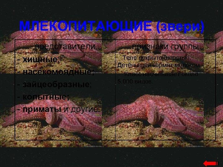 МЛЕКОПИТАЮЩИЕ (звери) представители - хищные; - насекомоядные; - зайцеобразные; - копытные; - приматы и