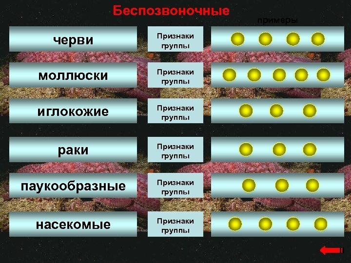 Беспозвоночные черви Признаки группы моллюски Признаки группы иглокожие Признаки группы раки Признаки группы паукообразные