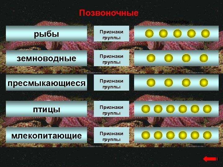 Позвоночные примеры рыбы Признаки группы земноводные Признаки группы пресмыкающиеся Признаки группы птицы Признаки группы