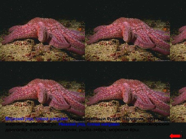 Верхний ряд, слева направо: обыкновенный судак, парусник, чёрный марлин, рыба-прыгун. Нижний ряд, слева направо: