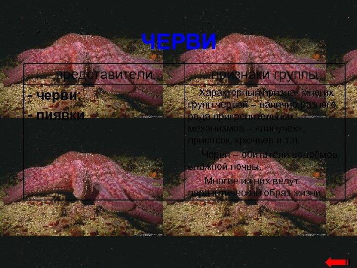 ЧЕРВИ представители - черви; - пиявки. признаки группы Характерный признак многих групп червей –