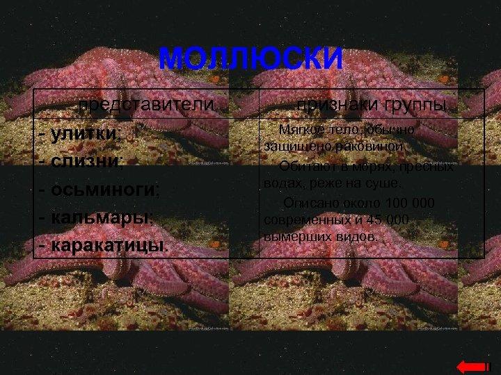 МОЛЛЮСКИ представители - улитки; - слизни; - осьминоги; - кальмары; - каракатицы. признаки группы