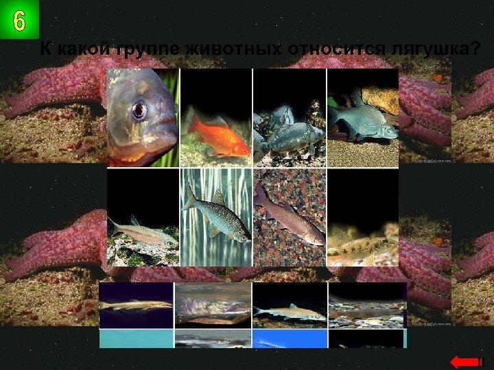 К какой группе животных относится лягушка? земноводн ые