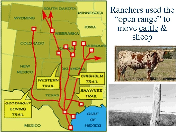 "Ranchers used the ""open range"" to move cattle & sheep"