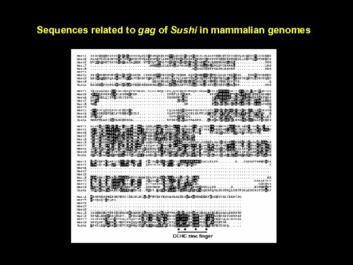 Sequences related to gag of Sushi in mammalian genomes