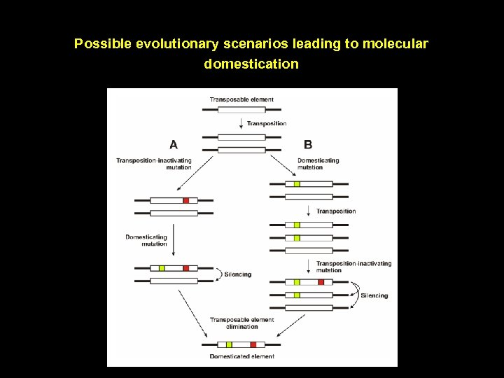 Possible evolutionary scenarios leading to molecular domestication