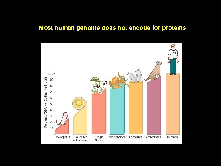 Most human genome does not encode for proteins