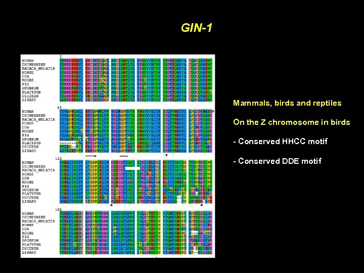 GIN-1 Mammals, birds and reptiles * * On the Z chromosome in birds -