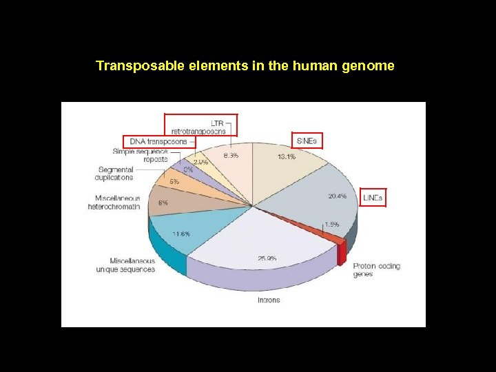 Transposable elements in the human genome
