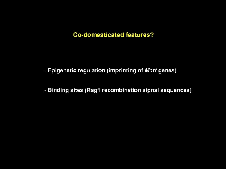 Co-domesticated features? - Epigenetic regulation (imprinting of Mart genes) - Binding sites (Rag 1