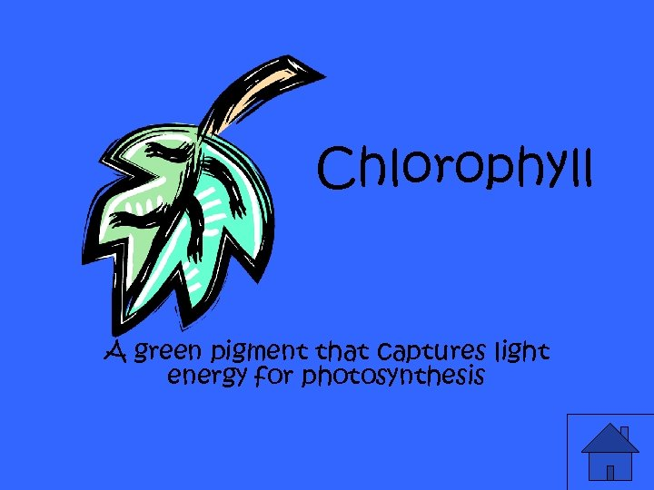 Chlorophyll A green pigment that captures light energy for photosynthesis