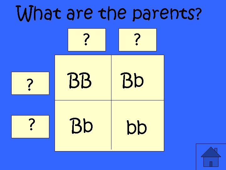 What are the parents? ? BB Bb ? Bb bb
