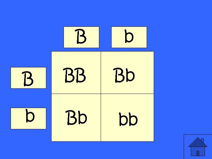 B b B BB Bb bb