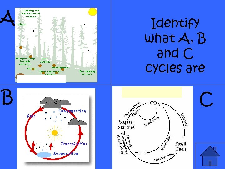 A B Identify what A, B and C cycles are C