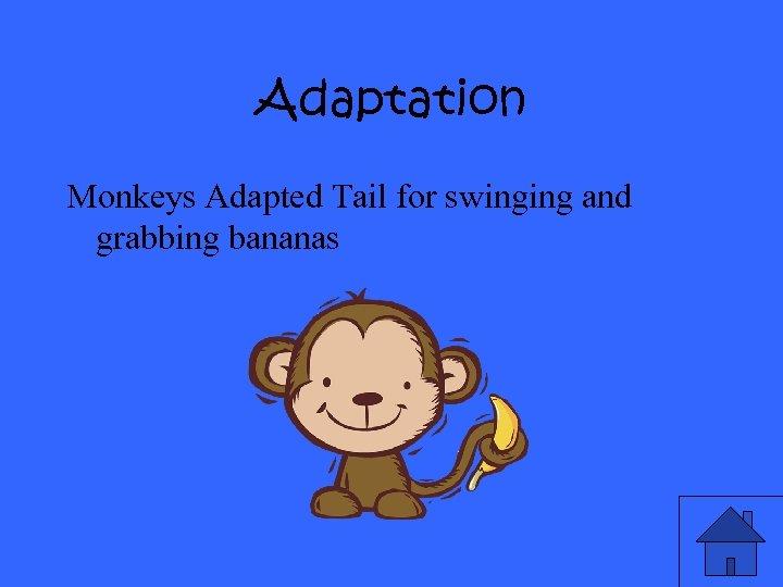 Adaptation Monkeys Adapted Tail for swinging and grabbing bananas