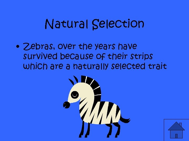 Natural Selection • Zebras, over the years have survived because of their strips which