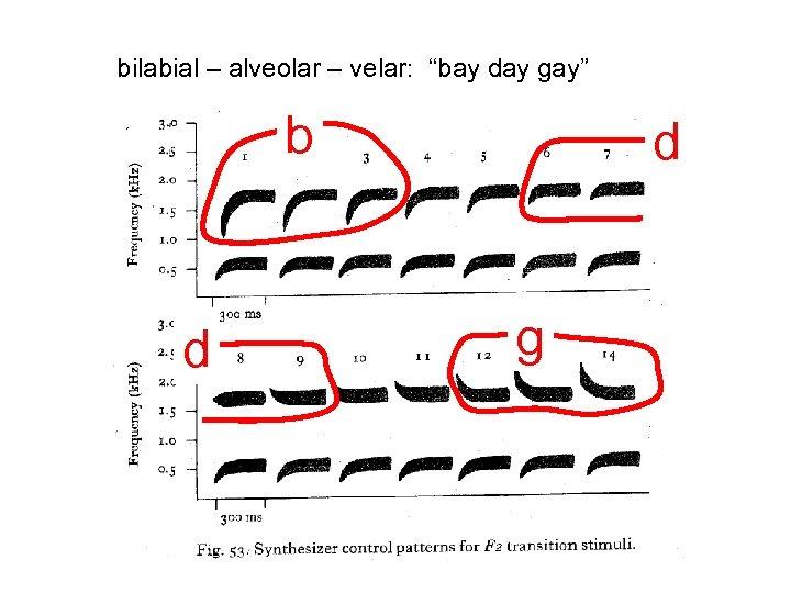 "bilabial – alveolar – velar: ""bay day gay"" b d d g"