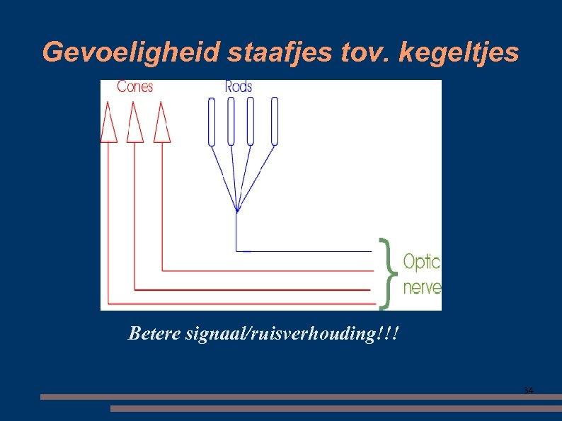 Gevoeligheid staafjes tov. kegeltjes Betere signaal/ruisverhouding!!! 34