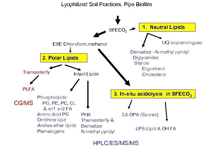 Lyophilized Soil Fractions, Pipe Biofilm 1. Neutral Lipids SFECO 2 UQ isoprenologues ESE Chloroform.