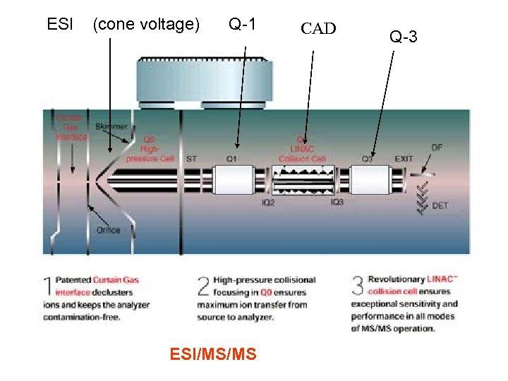 ESI (cone voltage) Q-1 ESI/MS/MS CAD Q-3