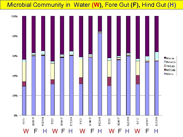 Microbial Community in Water (W), Fore Gut (F), Hind Gut (H) W F H