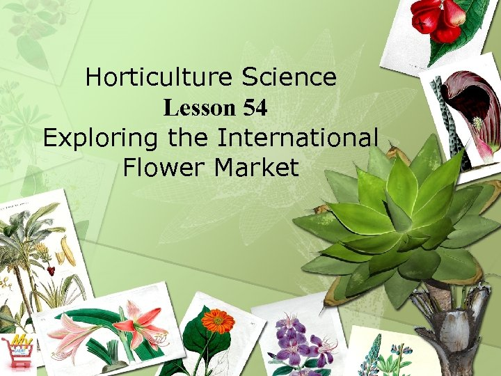 Horticulture Science Lesson 54 Exploring the International Flower Market