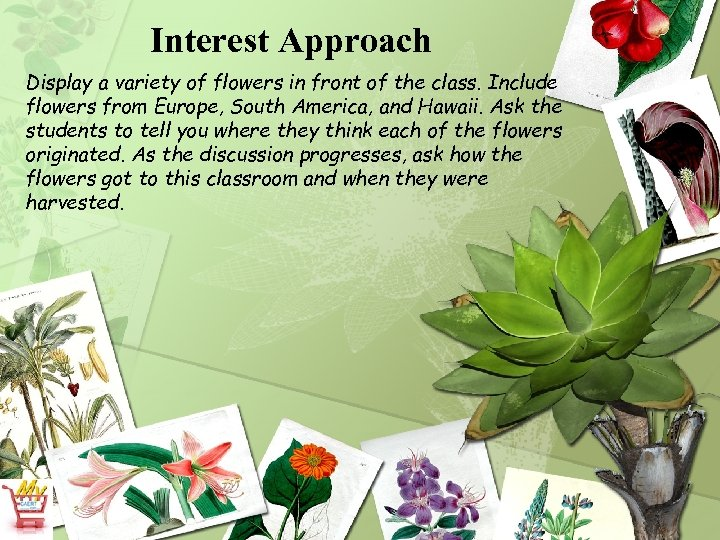 Interest Approach Display a variety of flowers in front of the class. Include flowers