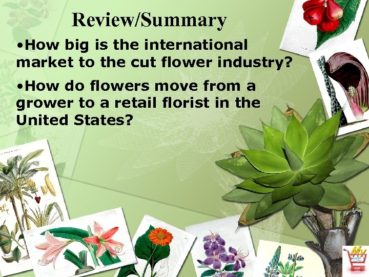 Review/Summary • How big is the international market to the cut flower industry? •