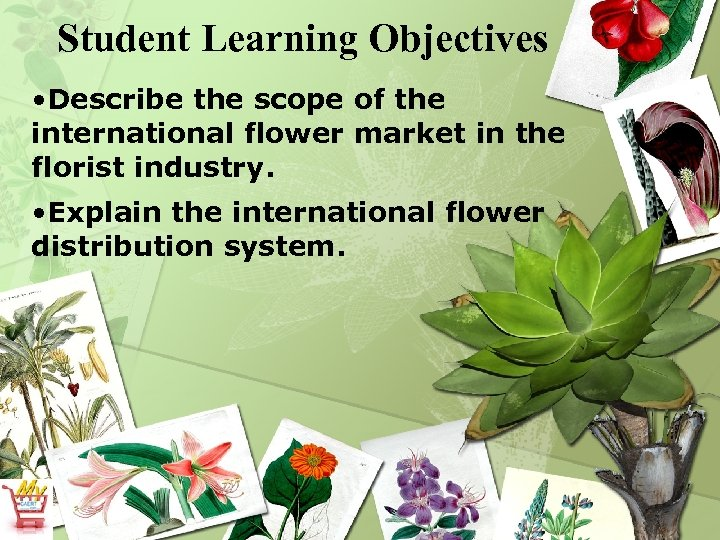 Student Learning Objectives • Describe the scope of the international flower market in the