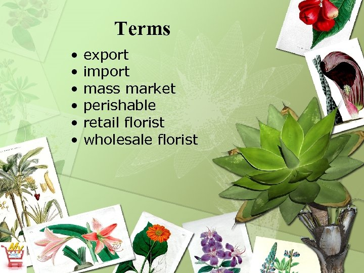 Terms • • • export import mass market perishable retail florist wholesale florist