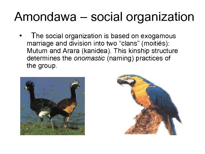 Amondawa – social organization • The social organization is based on exogamous marriage and