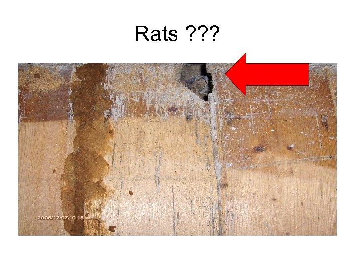 Rats ? ? ?