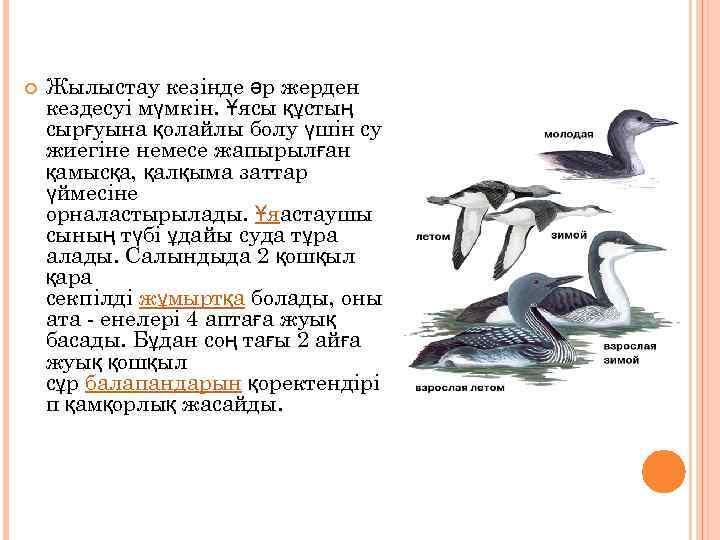 Тегін акула үшін ойын автоматтарын ойнаңыз