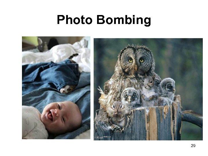 Photo Bombing 29