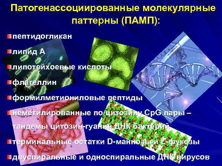 Патогенассоциированные молекулярные паттерны (ПАМП): пептидогликан липид А липотейхоевые кислоты флагеллин формилметиониловые пептиды неметилированные по