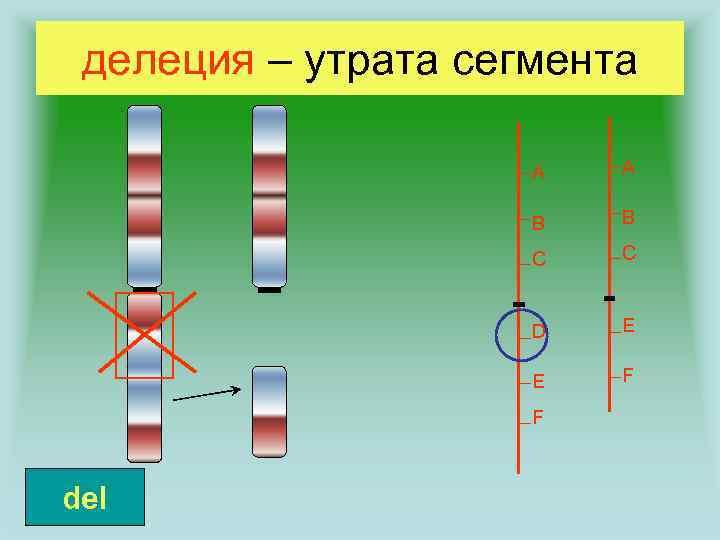 делеция – утрата сегмента A A B B C C D E E F